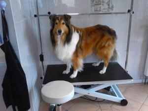 Hunde-Salon-Isen von Susanne Bux