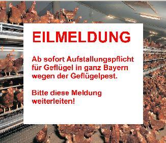 Aufstallungspflicht für Geflügel in ganz Bayern