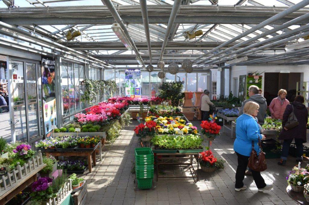 Schöne Auswahl an Frühlingsblumen bei Blumen Brechte in Isen