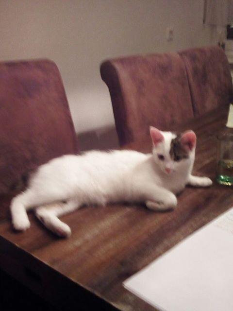 Katze Kitty aus der Göttnerstraße wird vermisst