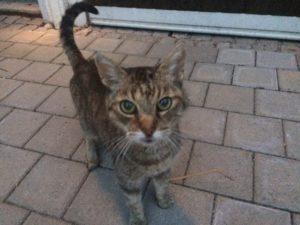 Katze am Altwegering zugelaufen – wer vermisst seine Katze?