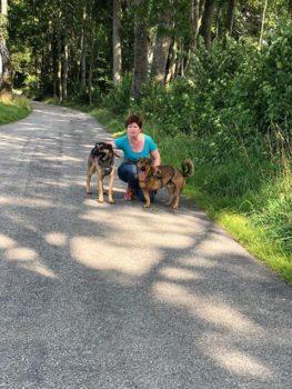 Gassigeh-Service für Hundebesitzer
