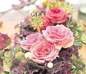 Eine Blumenpracht sind Mimmi- Eden Rosen.