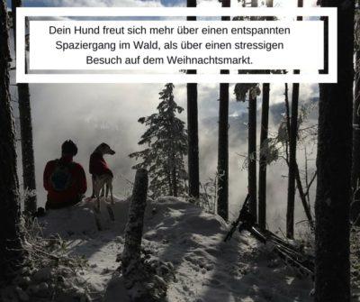 Hundebetreuung für Freunde des Weihnachtsmarktes in Isen und Umgebung
