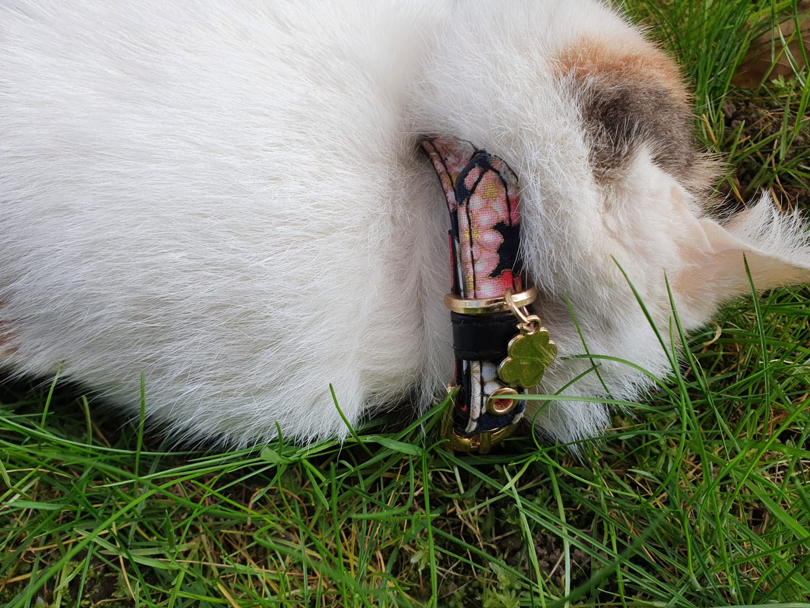 Tote-Katze-Viechter